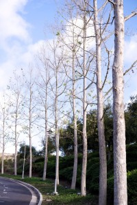 The Ten-Year Trees